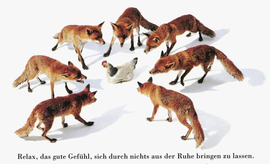 zuerich_relax_fuchs_0