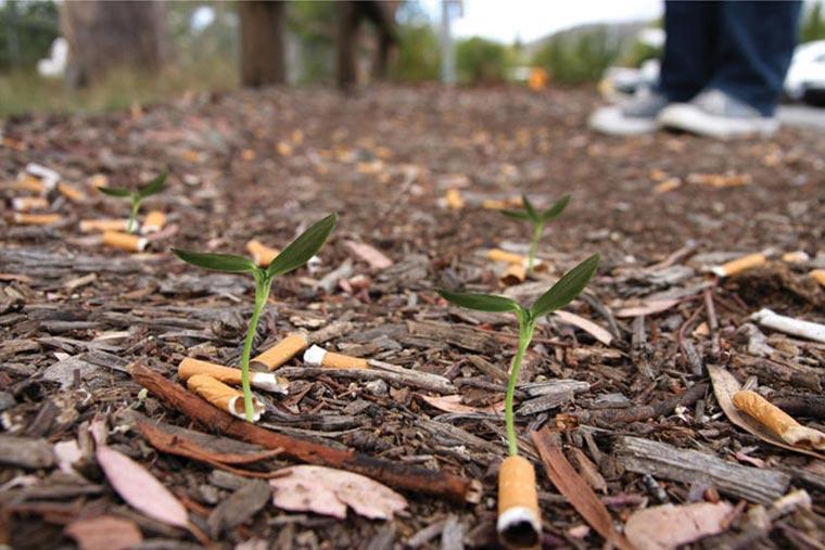 cigg_seeds_02