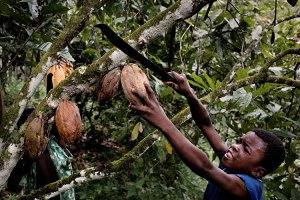 http://img.geo.de/div/image/70309/kinderarbeit-kakao-afrika-gross.jpg