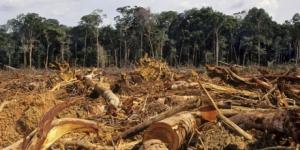 1359_Deforestation-Amazon-1024x667_1_460x230