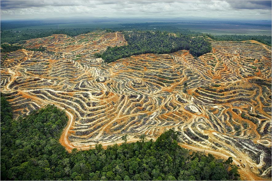 malaysia-regenwald-palmoelplantagen.jpg